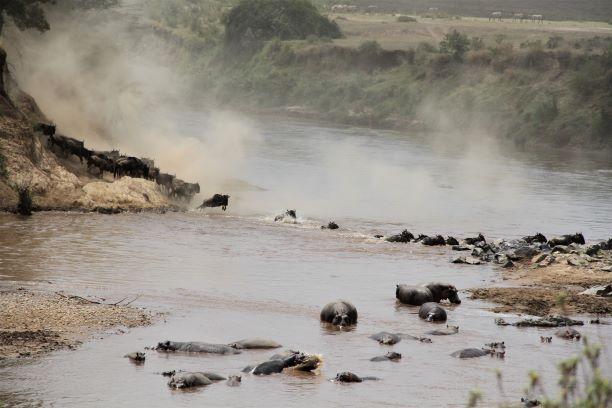 Cruzce de ñus por el río Mara. Por María