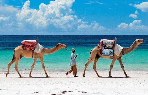 Actividad camellos en la playa, no recomendada. Por Expansion