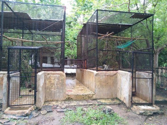 Cuidado de colobos en Colobus Conservation. Por Udare