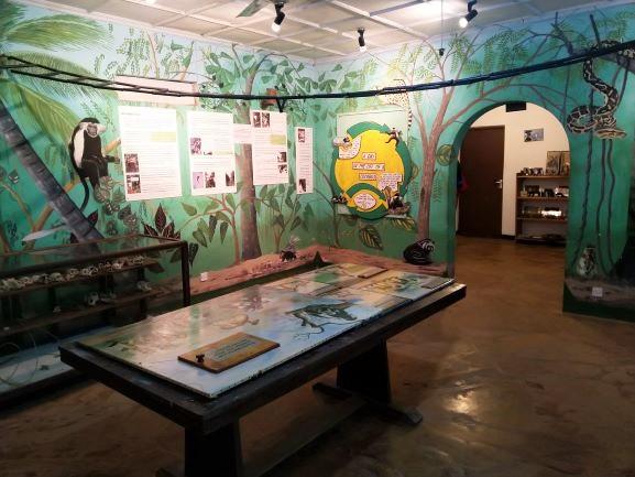 Interior Colobus Conservation ONG. Por Udare
