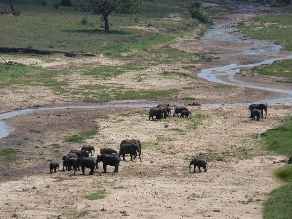 Elefantes en PN Tarangire. Por Suso y Anabel