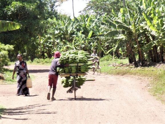 Plantaneros en Mto Wa Mbu. Por Suso y Anabel