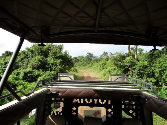 Durante el safari en el Parque Nacional Aberdare. Por Udare