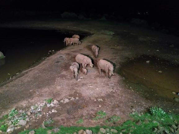 Elefantes bebiendo agua en la charca del hotel The Ark. Por Udare