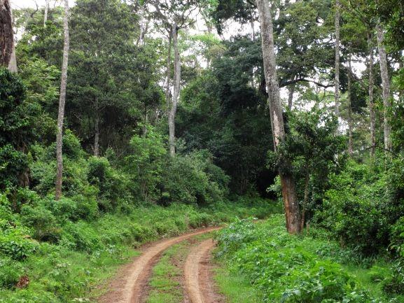 Parque Nacional Aberdare en Kenia. Por Udare