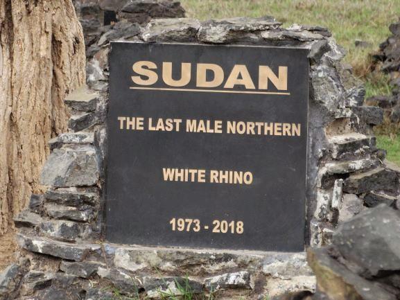 Tumba de Sudan, último rinoceronte blanco macho. Por Udare