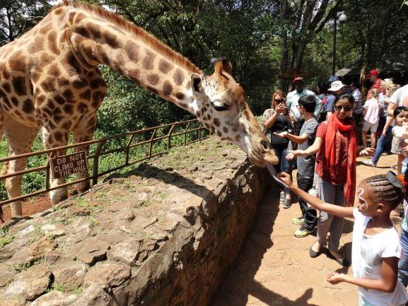 Turista tocando la lengua de la jirafa mientras le da de comer en Giraffe Centre de Nairobi. Por Udare