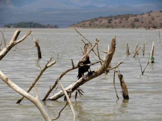 Lago Baringo. Por Udare
