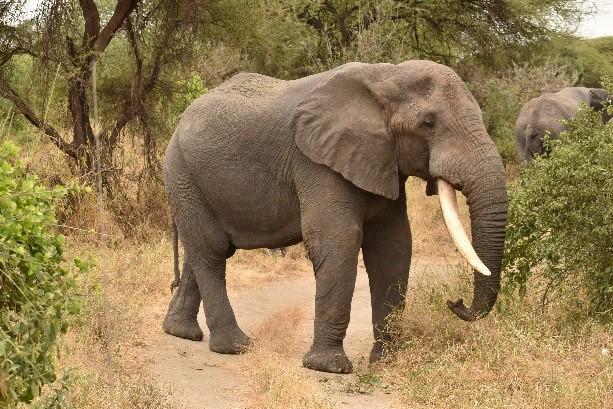 Elefante alimentándose. Por Naiara