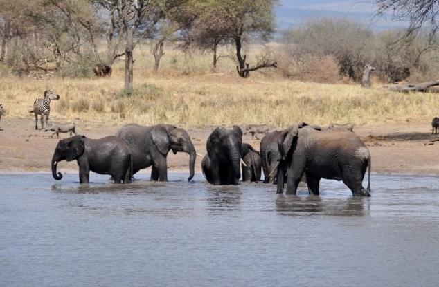 Elefantes en Tarangire. Por Marisa y Jose