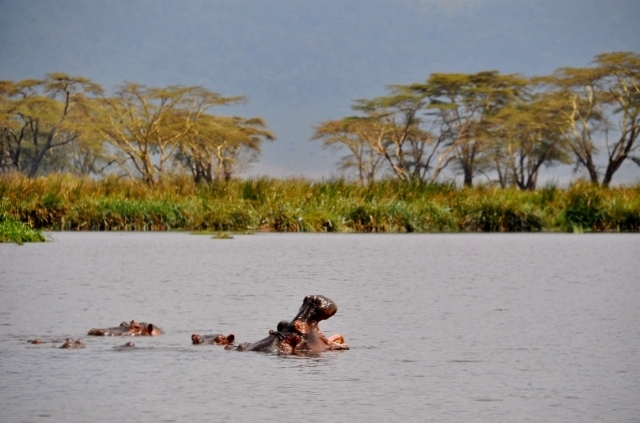 La hora del picnic en Ngorongoro. Por Marisa y Jose