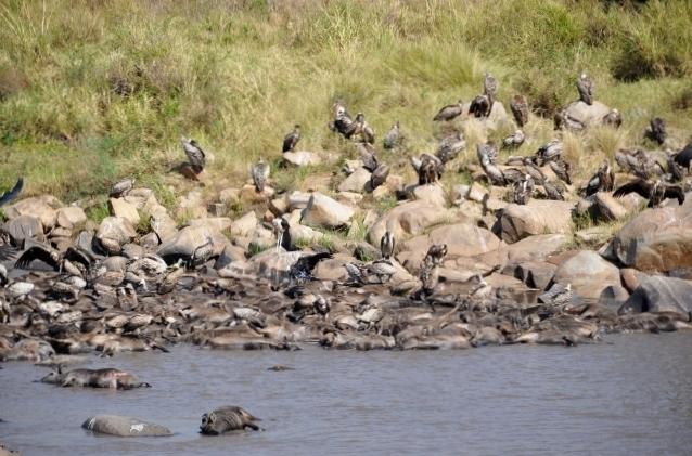 Trágico final en el río Mara. Por Marisa y Jose